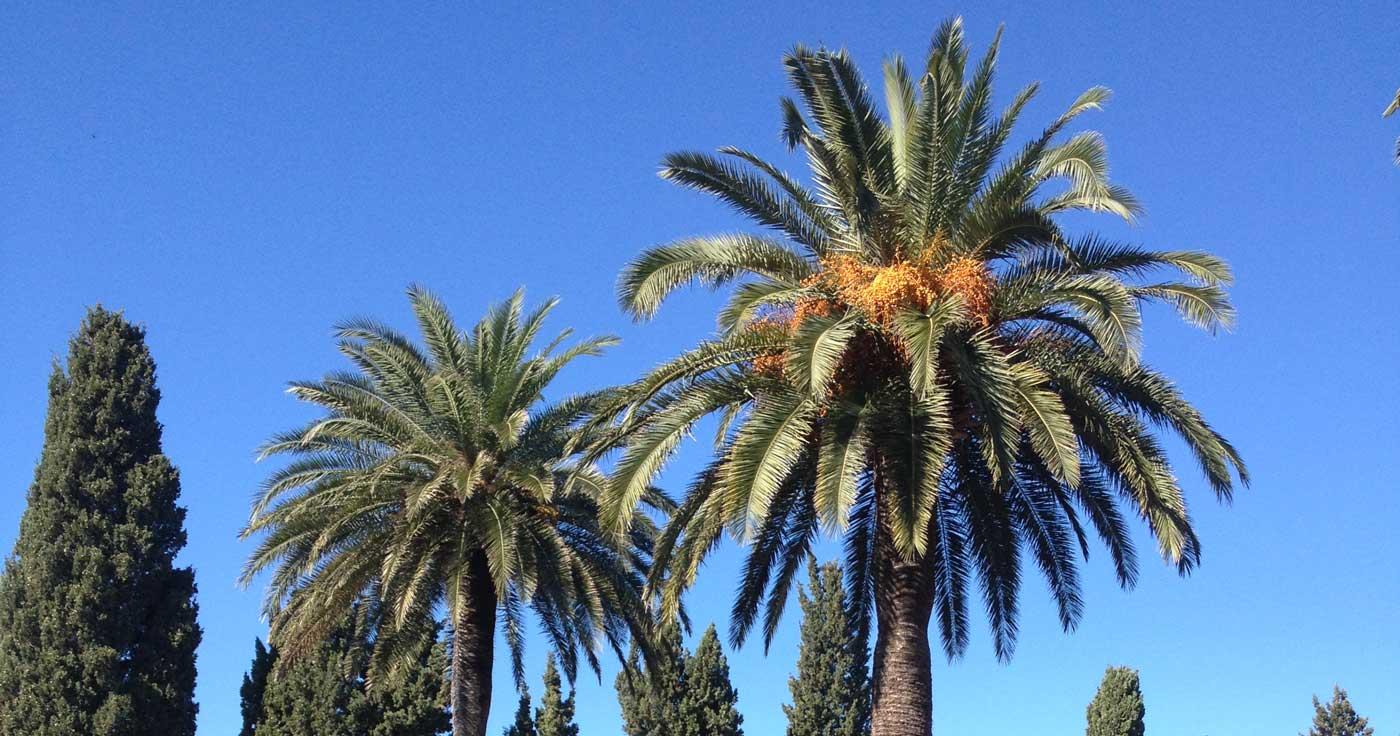 A l'ombre des palmiers au coeur d'un domaine viticole